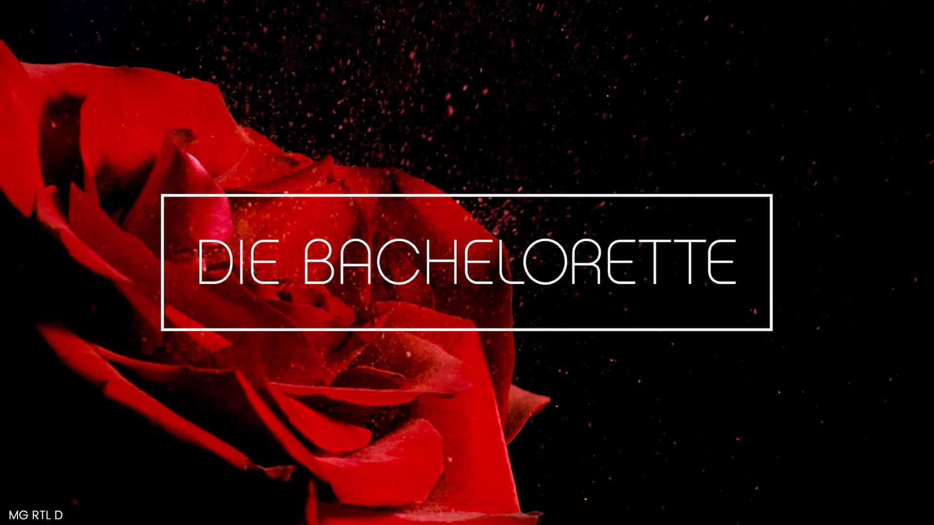 Eine rote Rose im Hintergrund mit dem Logo von Der Bachelorette