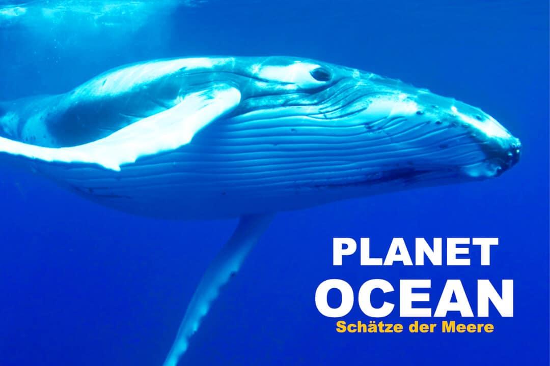Dokumetationen über die Ozeane